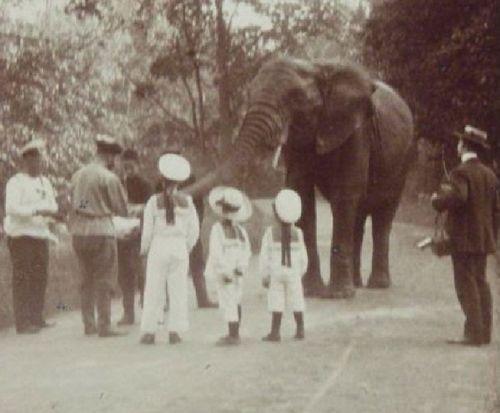 The imperial children's pet elephant in Tsarskoe Selo.