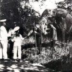 ROMANOV FAMILY PETS: THE ELEPHANT