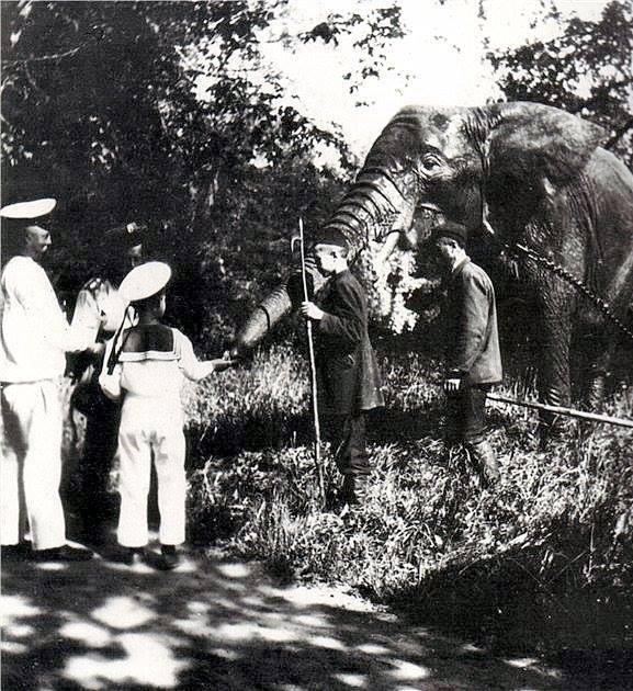 Tsarevich Alexei feeding the Romanov family pet elephant