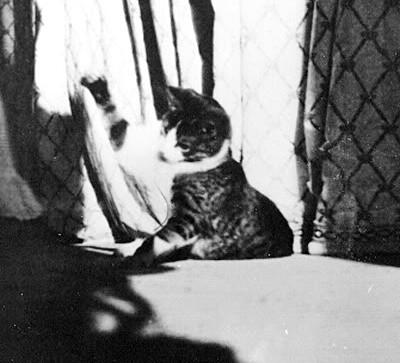 Olga Romanov's cat Vaska Romanov.
